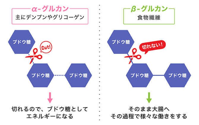β-グルカンとα-グルカンの違い