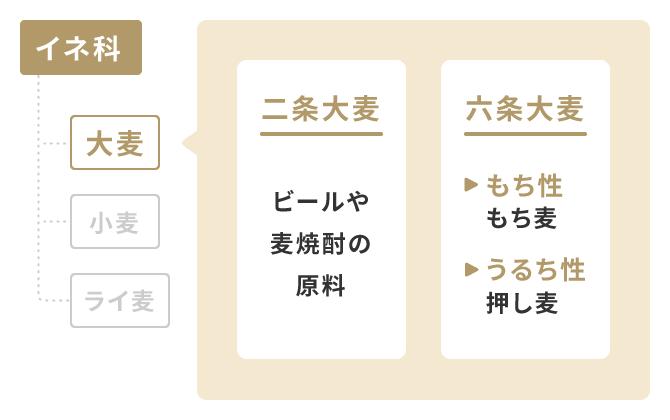 大麦の分類