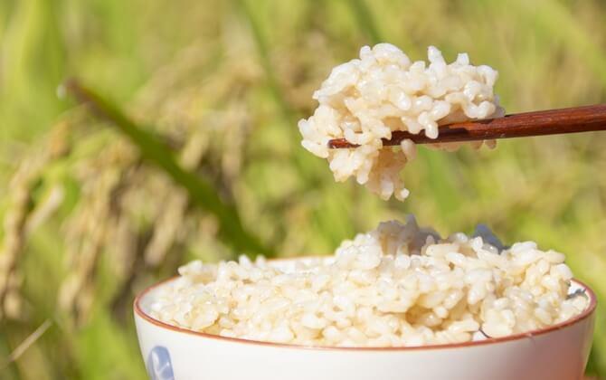 玄米と押し麦の栄養素比較