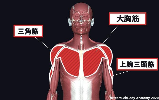 ダンベルプレスで鍛えられる筋肉