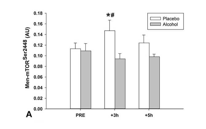 アルコール・mTOR・筋肉について報告されている研究