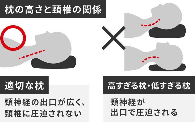 枕の高さと頸椎の関係