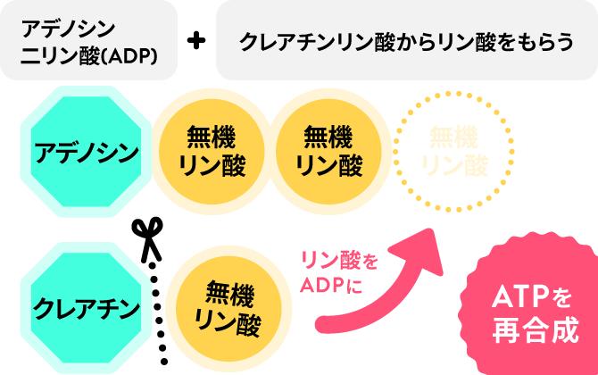 ATPの説明