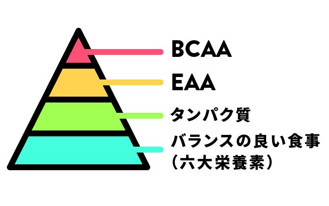 タンパク質のピラミッド